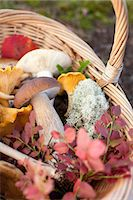 fungus - Basket of mushrooms and autumnal leaves Stock Photo - Premium Royalty-Freenull, Code: 649-07437094