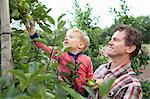 Farmer and son picking apples from tree in orchard Stock Photo - Premium Royalty-Freenull, Code: 649-07437984