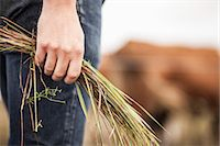 Midsection of farmer holding grass on field Stock Photo - Premium Royalty-Free, Artist: Robert Harding Images, Code: 698-07439590