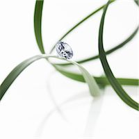 Thin strap green leaves or leaf strands with a small glass bead or gem, with cut facets reflecting the light. Stock Photo - Premium Royalty-Freenull, Code: 6118-07439832