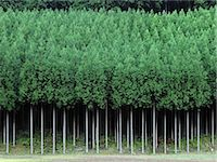 forestry - Kyoto, Japan Stock Photo - Premium Rights-Managednull, Code: 859-07441673