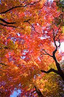 Autumn colors Stock Photo - Premium Rights-Managed, Artist: Aflo Relax, Code: 859-07441760