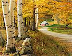 Autumn colors Stock Photo - Premium Rights-Managed, Artist: Aflo Relax, Code: 859-07441994