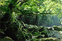 streams scenic nobody - Kumamoto Prefecture, Japan Stock Photo - Premium Rights-Managednull, Code: 859-07442021