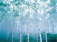 fantastically - Nagano Prefecture, Japan Stock Photo - Premium Rights-Managednull, Code: 859-07442099