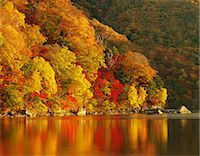 fall trees lake - Autumn colors Stock Photo - Premium Rights-Managednull, Code: 859-07442328