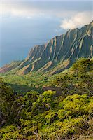 Kalalau lookout over the Napali coast from the Kokee State Park, Kauai, Hawaii, United States of America, Pacific Stock Photo - Premium Royalty-Freenull, Code: 6119-07443825