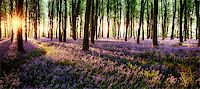 shaft - Long shadows in bluebell woods at sunrise Stock Photo - Royalty-Freenull, Code: 400-07445935
