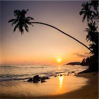 exotic outdoors - Palm tree at sunset on tropical Mirissa Beach, South Coast of Sri Lanka, Southern Province, Sri Lanka, Asia Stock Photo - Premium Royalty-Freenull, Code: 6119-07451155