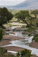 Masai Mara National Reserve, Kenya, East Africa, Africa Stock Photo - Premium Royalty-Freenull, Code: 6119-07452699