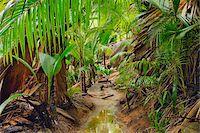seychelles - Pathway through Rainforest, Vallee de Mai Nature Preserve, Praslin, Seychelles Stock Photo - Premium Royalty-Freenull, Code: 600-07453831
