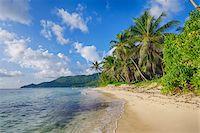seychelles - Anse Forbans Shoreline with Palm Trees, Mahe, Seychelles Stock Photo - Premium Royalty-Freenull, Code: 600-07453870