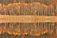 fall trees lake - Mirror lake in autumn Stock Photo - Premium Royalty-Freenull, Code: 6106-07455571