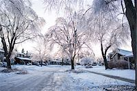 snow covered trees - Ice storm, Toronto, Ontario, Canada Stock Photo - Premium Royalty-Freenull, Code: 614-07487097