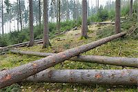 Felled spruces in forest, Spessart, Hesse, Germany, Europe Stock Photo - Premium Royalty-Freenull, Code: 600-07487434