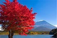 fall trees lake - Autumn leaves and Mount Fuji Stock Photo - Premium Rights-Managednull, Code: 859-07495663