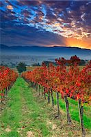Italy, Umbria, Perugia district. Autumnal Vineyards near Montefalco. Stock Photo - Premium Rights-Managednull, Code: 862-07495942
