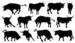 bull silhouettes on the white background