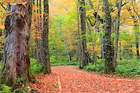 earth no people - Autumn leaves Stock Photo - Premium Royalty-Freenull, Code: 622-07519695