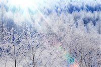 fantastically - Rimed trees Stock Photo - Premium Royalty-Freenull, Code: 622-07519831