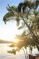 palm - Palm trees and sunlight, Castries, St Lucia, Caribbean Stock Photo - Premium Royalty-Freenull, Code: 649-07520849