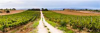 Vineyard at a winery near Noto, South East Sicily, Italy, Europe Stock Photo - Premium Rights-Managed, Artist: Robert Harding Images, Code: 841-07523239