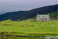 Shetland Isles, Scotland. Stock Photo - Premium
