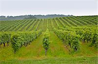 A vinyard in France Stock Photo - Premium Rights-Managednull, Code: 841-07523617