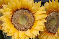 stamen - Flowers Stock Photo - Premium Royalty-Freenull, Code: 618-07524213