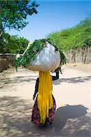 farmhand (female) - Indian woman villager working at farm smallholding carrying animal feed at Sawai Madhopur near Ranthambore in Rajasthan, India Stock Photo - Premium Rights-Managednull, Code: 841-07540435