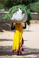 farmhand (female) - Indian woman villager working at farm smallholding carrying animal feed at Sawai Madhopur near Ranthambore in Rajasthan, India Stock Photo - Premium Rights-Managednull, Code: 841-07540436
