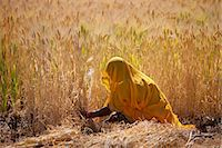 farmhand (female) - Barley crop being harvested by local agricultural worker in fields at Nimaj, Rajasthan, Northern India Stock Photo - Premium Rights-Managed, Artist: Robert Harding Images, Code: 841-07540455