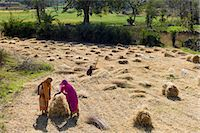farmhand (female) - Female agricultural workers at Jaswant Garh in Rajasthan, Western India Stock Photo - Premium Rights-Managednull, Code: 841-07540469