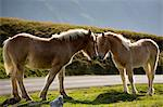 Mare and foal horses in Vallee d'Ossau near Laruns in Parc National des Pyrenees Occident, France Stock Photo - Premium Rights-Managed, Artist: Robert Harding Images, Code: 841-07540725