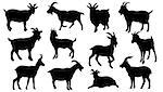 goat silhouettes on the white background
