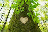 Heart Carved in European Beech (Fagus sylvatica) Tree Trunk, Odenwald, Hesse, Germany Stock Photo - Premium Royalty-Freenull, Code: 600-07562375