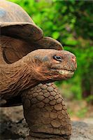 Turtle Stock Photo - Premium Rights-Managed, Artist: Aflo Relax, Code: 859-07566262