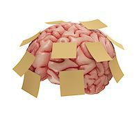 Human brain with yellow sticky notes attached. Concept of good or bad memory. Clipping path included. Stock Photo - Royalty-Free, Artist: ktsimage, Code: 400-07571794