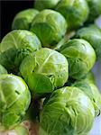 Brussels sprouts tree Stock Photo - Premium Rights-Managed, Artist: foodanddrinkphotos, Code: 824-07586118