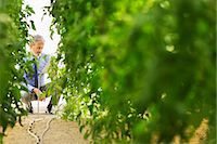 science & technology - Botanist using digital tablet in greenhouse Stock Photo - Premium Royalty-Freenull, Code: 6113-07589138