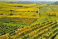 Vineyard landscape, near Bad Duerkheim, German Wine Route, Rhineland-Palatinate, Germany, Europe Stock Photo - Premium Rights-Managednull, Code: 841-07590141