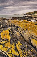 Lichen-covered rocks, Carcass Island, Falkland Islands Stock Photo - Premium Rights-Managed, Artist: Mint Images, Code: 878-07590845