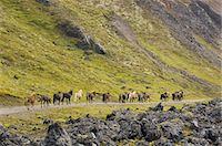 Ponies, Equus caballus, Iceland Stock Photo - Premium Rights-Managed, Artist: Mint Images, Code: 878-07591049