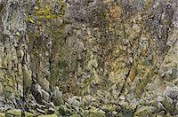 fungus - Lichen-covered cliffs, Melchior Island, Antarctica Stock Photo - Premium Rights-Managed, Artist: Mint Images, Code: 878-07591157