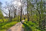 Path in early Spring, Park Schonbusch, Aschaffenburg, Spessart, Lower Franconia, Bavaria, Germany