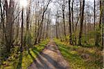 Forest Path in early Spring with Sun, Nature Reserve, near Monchbruch, Mohrfelden and Russelsheim, Hesse, Germany