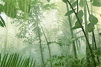 palm - Rainforest trees, plants, shrubs and leaves. Stock Photo - Premium Rights-Managednull, Code: 878-07591225