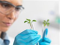Scientist viewing seedling in test tubes under trial in lab Stock Photo - Premium Royalty-Freenull, Code: 649-07596077