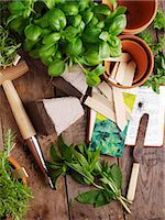 Basil, mint and rosemary with garden utensils Stock Photo - Premium Royalty-Freenull, Code: 659-07598830