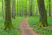 Path through Beech Forest, Hainich National Park, Thuringia, Germany, Europe Stock Photo - Premium Royalty-Freenull, Code: 600-07599868